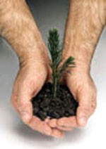 12 Reasons to Give Away Live Tree Seedlings for Earth Day