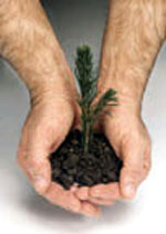 Live tree seedlings from EcoMarketing Solutions