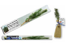 Live Christmas Tree Seedlings