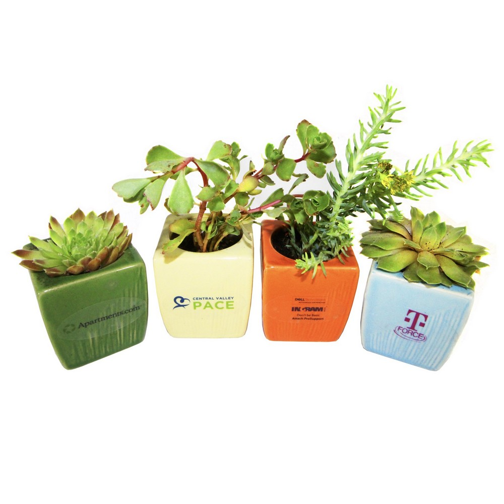 4 Reasons Succulents Have Become The Hottest Trending Green Promo Item