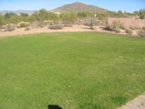 Will the Southwest Outlaw Green Lawns Entirely Soon?