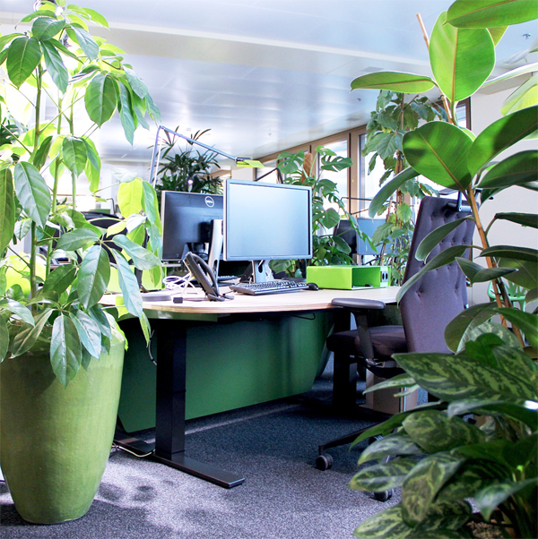 5 Easy Ways to Make Your Home Office Eco-Friendly
